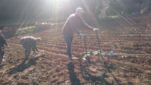 planting on the slopes